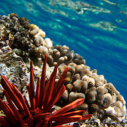 under water photography,Hawaii,MAui