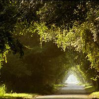 Country lane at sunrise, Sarasota, Florida