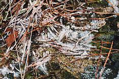 Plaatjesloze vlieszwammen, Aphyllophorales
