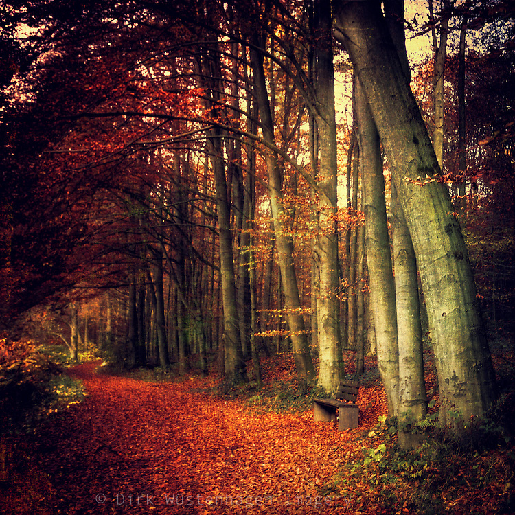 Beech tree  forest on an autumn morning - texturized photograph<br />