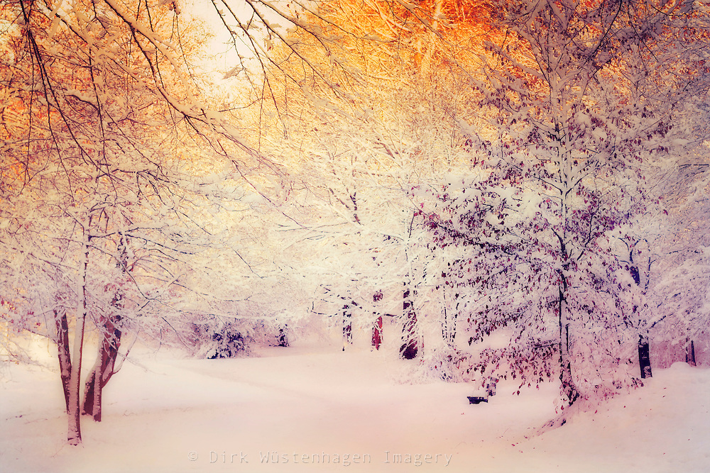 Sonnenaufgang in verschneitem Wald, Wuppertal, Deutschland<br /> Sunrise in wintry forest.<br /> REDBUBBLE Prints &amp; more: http://rdbl.co/2iOjHsL