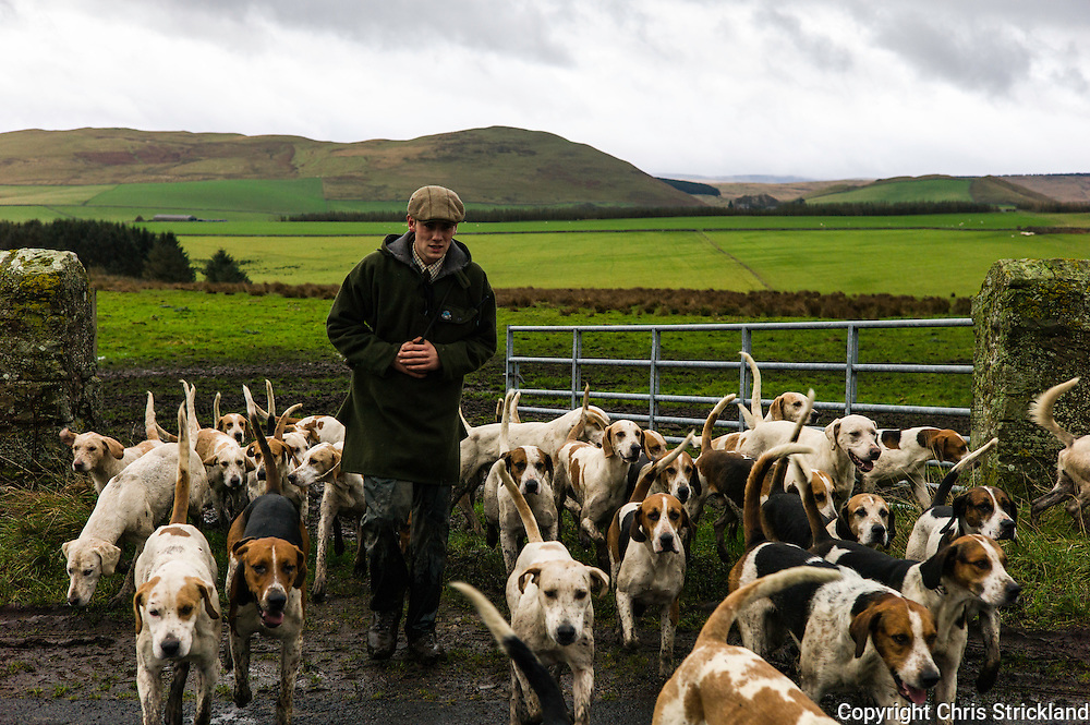 Jedburgh, Scottish Borders, UK. 17th December 2015. Huntsman Johnny Richardson and the hounds of the Jedforest Hunt make their way through a gateway in muddy conditions on another wet day in the Scottish Borders.
