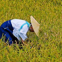 Kyoto, OCT  25: a participant on the rice harvest ceremony held on October 25 2009  in Fushimi Inari shrine in Kyoto, Japan