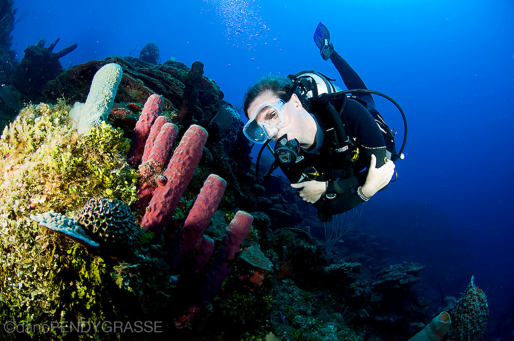 A diver inspects some tube sponges along the reef crest in Roatan, Honduras.