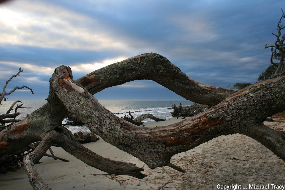 Dead driftwood trees on a gloomy Jekylly Island Beach forming a diamond shaped frame of the surf and horizon.
