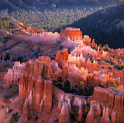 Hoodoos At Sunrise, Bryce Canyon