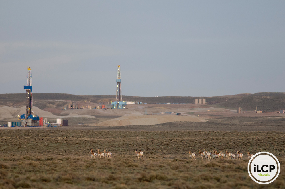 Pronghorn (Antilocapra americana) in front of natural gas rigs.