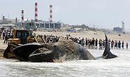 Dead Whale on Los Angeles beach