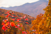 Colorful autumn foliage as leaves change colors along the Blue Ridge National Park near Asheville, North Carolina.