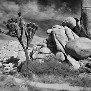 Joshua Tree Large Rocks - Infrared Black & White