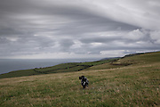 The dog chasing a ball on Exmoor, just east of Lynmouth, north Devon/Somerset borders