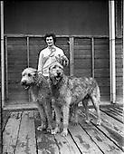 1960 - Irish Kennel Club Dog Show at the RDS, Ballsbidge, Dublin