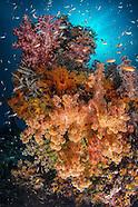 Indo - Raja Ampat/Triton Bay 2013