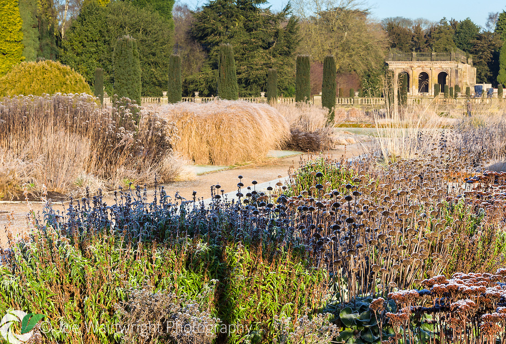 Frost on a herbaceous border in the Italian Garden at Trentham Gardens, Staffordshire - designed by Tom Stuart-Smith