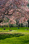 New York City: Spring in Central Park