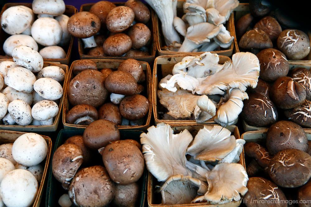 USA, California, Los Angeles, Local organic mushroom varieties at the Hollywood Farmer's Market'