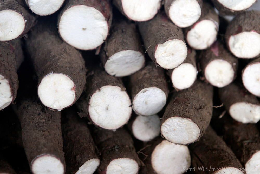 South America, Brazil, Manaus. Manioc, or cassava, in the market of Manaus.