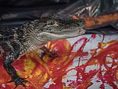 Zoo's animals-artists create paintings 04/01/2017