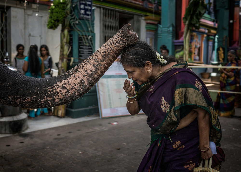 Woman receives a blessing from a temple elephant, a stand in for Ganesha, at the Ganesh Chaturthi Festival at Arulmiga Manakula Vinayagar Temple.  Pondicherry, India.