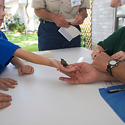 Young boy allowed to hold hummingbird prior to release at the Hummer/Bird Celebration in Rockport Texas Sept 2005