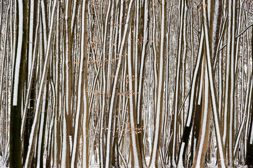 A woodland hit by a light snowfall in Ötlingen, Germany. The side wind stuck the snow on one side of the trees creating an alternating set of dark and white stripes resempling a natural barcode