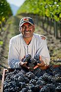 Wine - Portraits