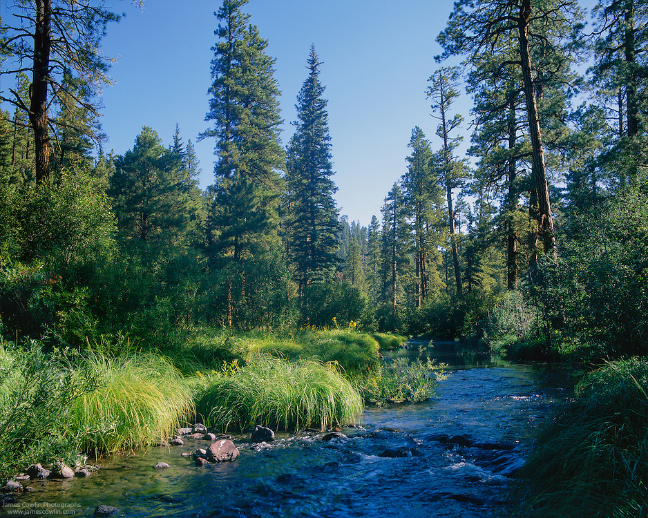 Image result for east fork black river az