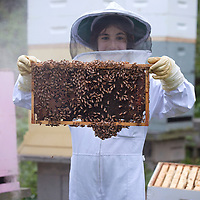 Young Apiarist working with Bees