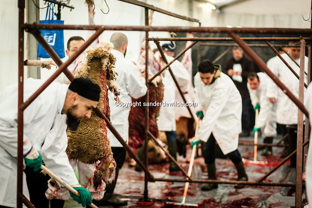 2012 26 October Brussels, Belgium. During Eid al-Adha, many Muslim families sacrifice a sheep and share the meat with the poor. Cleaning of the temporary slaughterhause while others slaughter the hanging sheep. The government of Belgium forbids slaughtering at home, and put up temporary slaughterhauses, like here in Brussels.