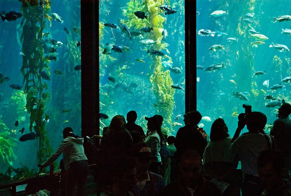Monterey Bay Aquarium Greg Vaughn Photography
