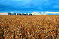 Grain Bins East of Calgary