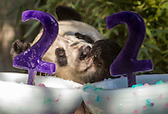 Panda Bai Yun Celebrates 22nd Birthday at San Diego Zoo