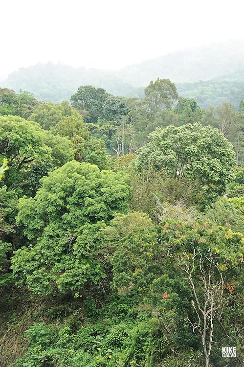 Landscape at Finca Lerida Coffee Plantation