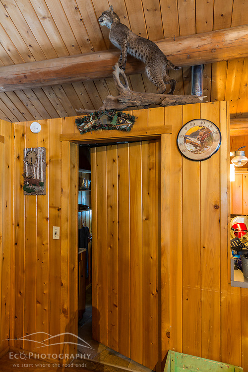 A taxidermy bobcat in the Bridge Cabin at Bowlin Camps near Patten, Maine, and Katahdin Woods and Waters National Monument.