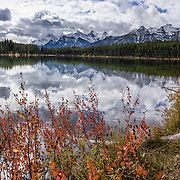 Peaks of the Bow Range reflect in Herbert Lake, Canadian Rockies, Banff National Park, Alberta, Canada. Foreground fall color foliage turns orange and yellow in mid September. Banff National Park is Canada's oldest national park, established in 1885, and is part of the Canadian Rocky Mountain Parks World Heritage Site declared by UNESCO in 1984. This panorama was stitched from 5 overlapping images.