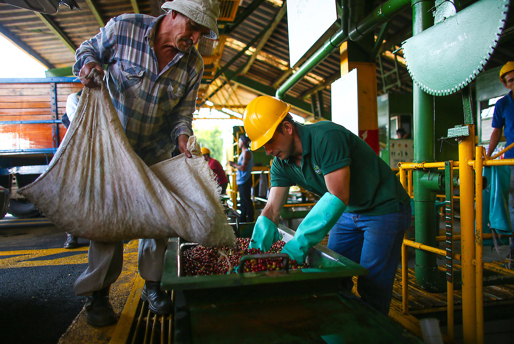 A coffee farmer delivers his daily haul at the Terrazzu collection and processing coop during the 2016 Starbucks Origin Experience for Partners. Photographed in January 2016. (Joshua Trujillo, Starbucks)<br /> <br /> ***model released***