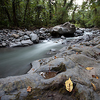 River flowing through forest on Kolombangara