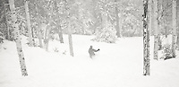 Telemark skiing at Mad River Glen in Waitsfield, Vermont