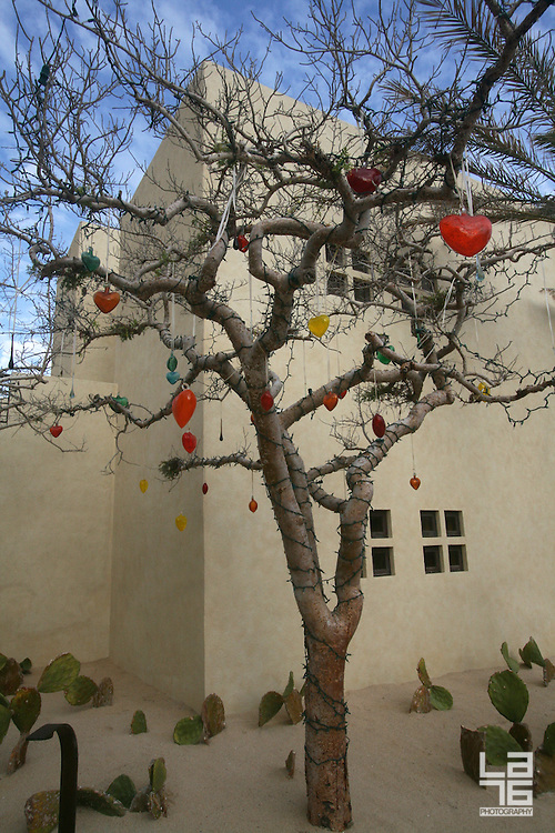 Valentine's Day Tree, Torote Tree or Elephant Tree decorated with hearts