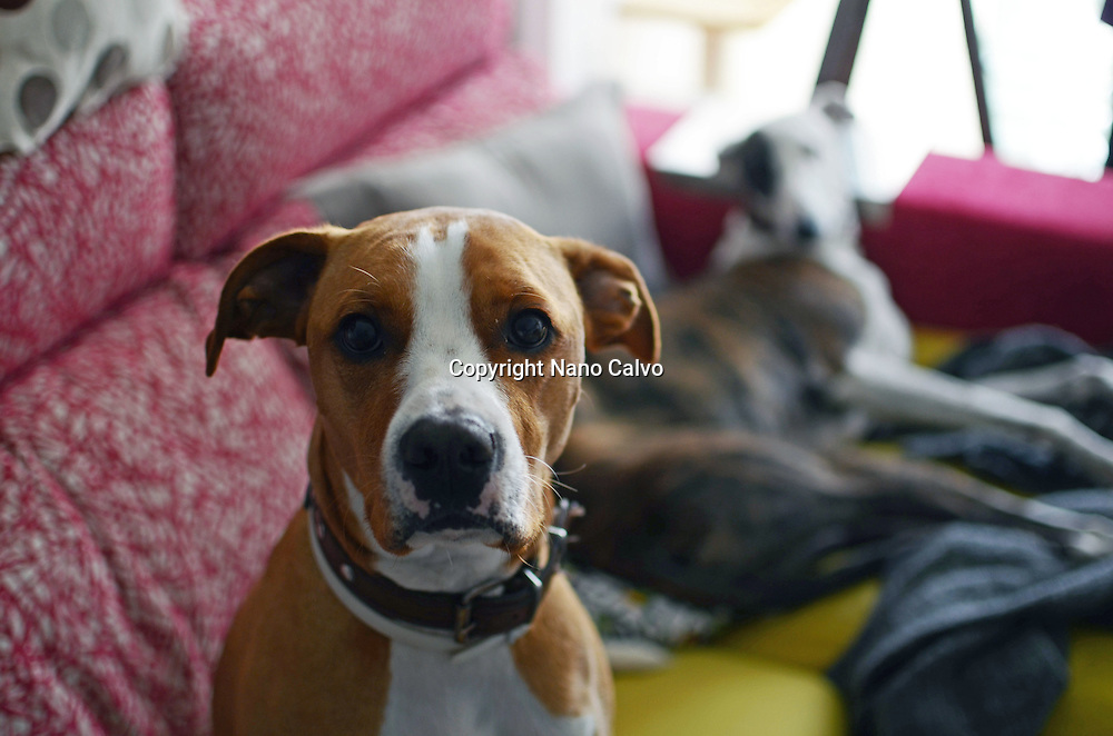 Dogs on house sofa