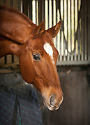 Equestrian photo shoot, Crows Hall, Debenham, Suffolk.