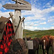Flere firma satser på hesteturisme fjellet i Tydal, og i bygda Stugudal er det flere islandshester enn fastboende. There are many possibilities for riding in the mountains in Tydal in Mid-Norway. Dyrhaug Ridesenter. Dyrhaug Ridesenter,