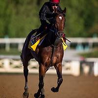 Declaration of War trains for the Breeders' Cup Classic at Santa Anita Park in Arcadia, California on October 31, 2013. (Alex Evers/ Eclipse Sportswire)