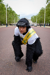 """© Licensed to London News Pictures. 29/04/2017. London, UK. Met Police officer Tom Harrison, 41, known as """"Mr Gorilla"""", celebrates in The Mall, in front of Buckingham Palace, after finally completing the London Marathon after six days of crawling and raising £23,900 for The Gorilla Organisation.   Photo credit : Stephen Chung/LNP"""