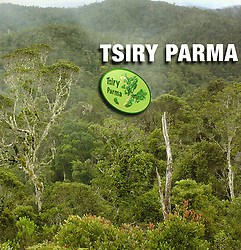 Tsiry Parma is an italian Non-Profit Organization working in Madagascar since 2012. Operates against deforestation and in social-environmental sphere (builds schools, projects for agricultural development, ecotourism and plantations of coffee) in order to improve the quality of life for people living in the jungle of Madagascar.<br />