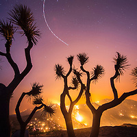 A burned Joshua Tree silhouetted against the Erskine Fire, which tore through the hillside killing the tree and hundreds of others in Kern County, CA. Air Attack circles overhead, an aircraft orbiting the fire overnight to monitor it's spread and behavior. <br /> <br /> The Erskine Fire burns near Lake Isabella and Kernville, CA USA in Kern County, CA. By Friday afternoon the fire had burned over 19,000 acres, destroyed an estimated 100 homes, and caused two fatalities. The blaze was 0% contained. <br /> <br /> <br /> Long exposure image.