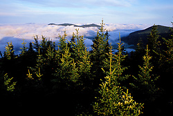 From Sugarloaf Mtn. Looking at The Nature Conservancy's Bunnell Tract. Balsam Fir, Abies balsamea.  Nash Stream State Forest.  Northern Forest,  Stratford, NH