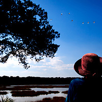 LITTLE ST. SIMONS ISLAND, FL -- October 1, 2010 -- Jill Conversano of Alpharetta, Georgia, looks out over the marshland while on a birding tour on Little St. Simons Island on Friday, October 1, 2010.   The 10,000 acres of marshland, beaches, and forests are a refuge for wildlife and vacationers alike with only 32 guests permitted a night.  (Chip Litherland for Bay Magazine)