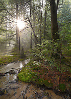 Iargo Springs<br /> Huron National Forest