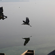 A bird skims the surface of Lake Victoria on the morning of June 30th. Here in Ggaba, a small town in southern Uganda that almost entirely subsists on the fishing industry, the locals have contributed to the dangerous overfishing of the lake despite strict regulations from Tanzania, Uganda, and Kenya. Fishermen continue to keep fish that are far below the required minimum weight and employ dymanite and poison.
